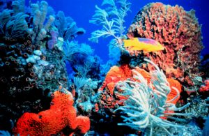 Did rapid sea-level rise drown fossil coral reefs around